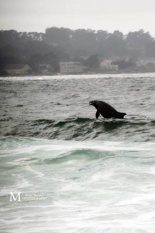Dolphin sighting during wedding ceremony Monterey